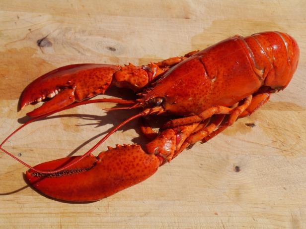 lobster-1726627_1920